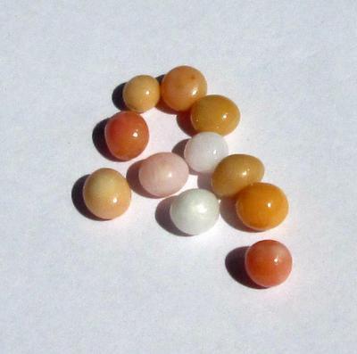 conch pearl