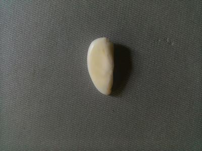 1/2 Moon - 5.5carats Natural Pearl