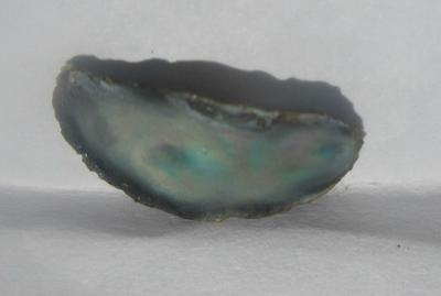 14mm Natural Iridescent Abalone Pearl for Sale