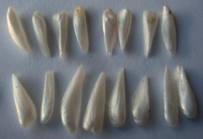 16 Spike Natural USA Pearls