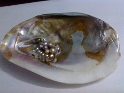 colored pearls in shell
