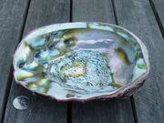 Abalone Inside