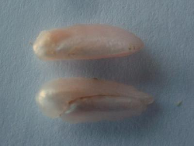 13mm Natural Freshwater Spike Pearls