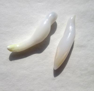 2 Clam Pearls Baroque Elongated 20mm