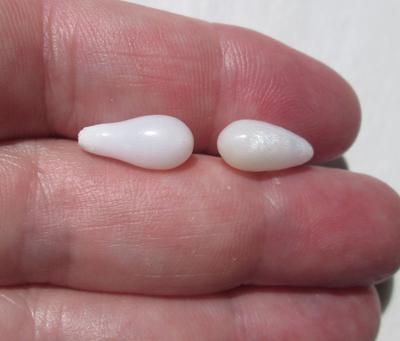 2 Drop Shaped Clam Pearls 7 carats Total