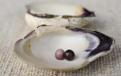 Two pearls discovered by Lisa McGrath and her daughter, Lindsey, while raking in Buzzards Bay.