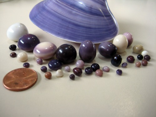 Quahog Pearls Photo