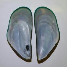 Natural Blister Pearl