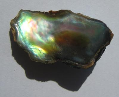 13.85 carats Abalone Pearl