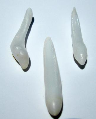 25mm Long Drop Set of 3 Clam Pearls for Sale