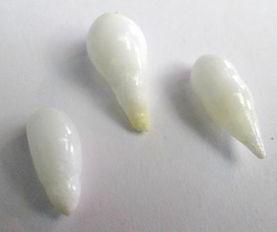 3 Clam Pearls Drop Shape 23+ carats Total 16+mm