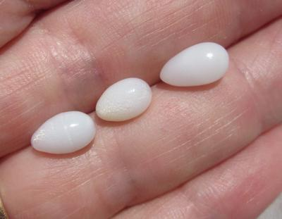 3 Clam Pearls Drop Shape 6+ carats