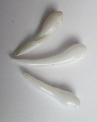3 Elongated Clam Pearls Set 20+ carats for Sale