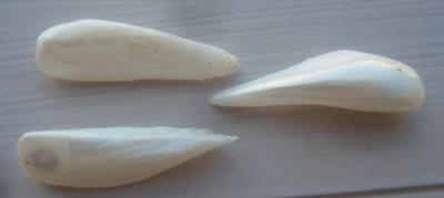 3 Natural USA Spike (Wing) Pearls