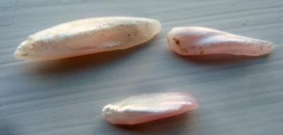 3 Pink Natural USA Wing Pearls