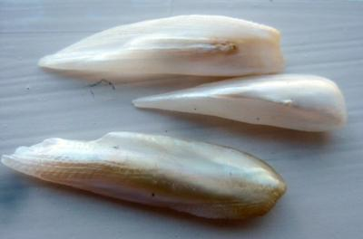 3 Wing Pearls Natural USA Freshwater