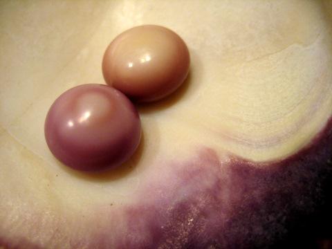 2 Quahog Pearls