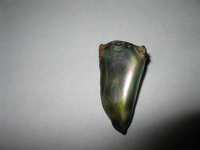 35 carat abalone pearl
