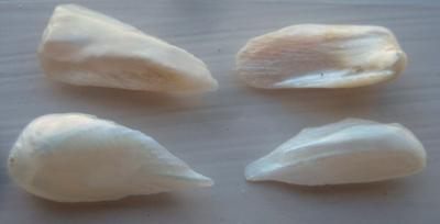4 Natural USA Pearls - Spike / Wing Shape