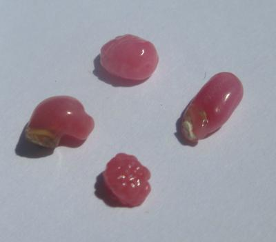 4 Small Pink Conch Pearls 2.89 carats
