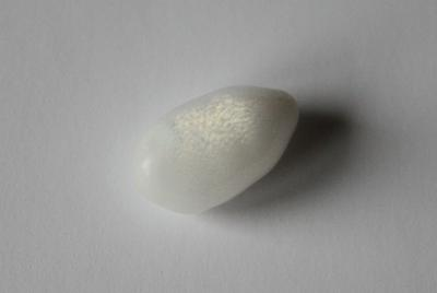 7.55 carat drop shaped clam pearl