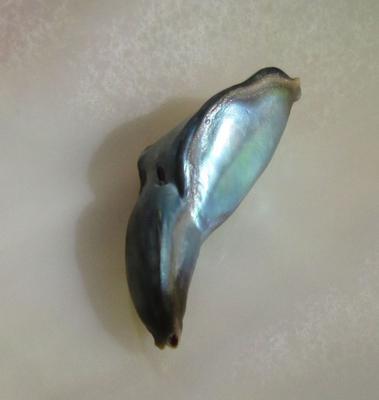 7 carats Abalone pearl Greenish Iridescence