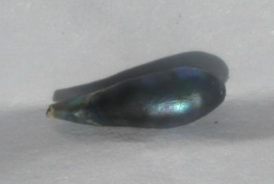 0.40 carat Iridescent Bluish Abalone Pearl for Sale