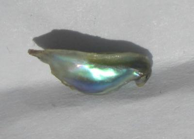 9mm Iridescent Abalone Pearl for Sale