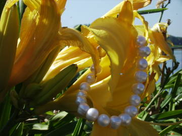 white pearls and yellow daylily