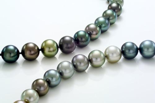 Fiji Pearls