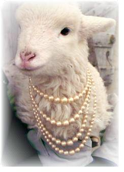 faux graduated pearls on lamb