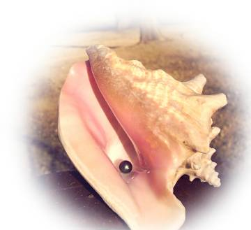 Tahitian pearl on conch shell