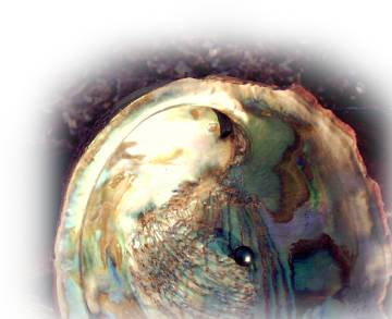 Tahitan pearl on Abalone shell