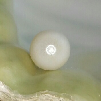 A Clam Pearl Drop 8.05 ct