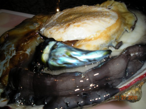 Abalone Pearl 118 carats
