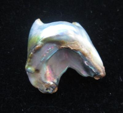 Abalone Pearl 17mm with Iridescence 11+ carats