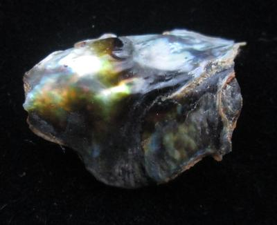 Abalone Pearl with Iridescence 22mm 10+ carats
