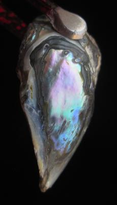 Abalone Pearl with Iridescence 31mm 21+ carats