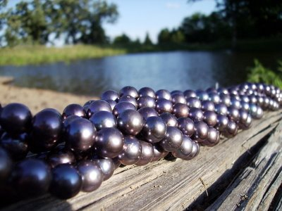 Anderwood Pond Black Pearls