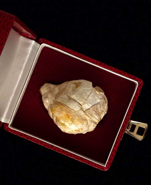 Large Fossil Pearl