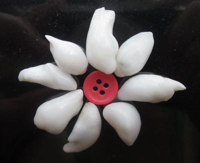 Baroque Clam Pearl Brooch Potential 68+ carats - Total
