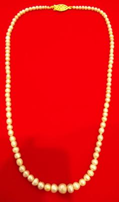 Basra Pearl Necklace from Persian Gulf 63.56 Carats