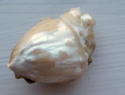 Biological Heart Shaped Natural Pearl