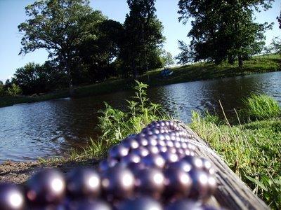 Black freshwater pearls Anderwood pond