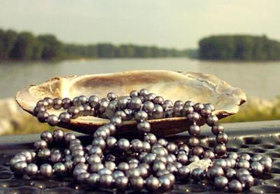 Black Pearls Tumbling from Shell