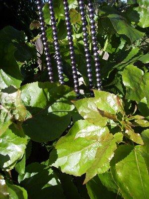 Black pearls by popular leaves
