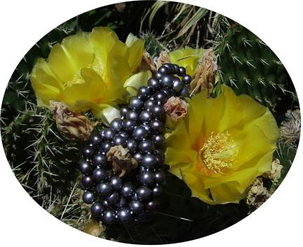 Black pearls on cactus