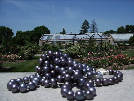 black pearls by greenhouse