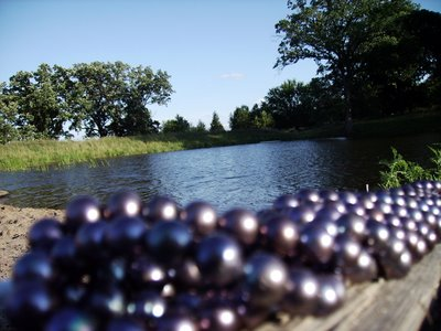 Black pearls Anderwood Pond