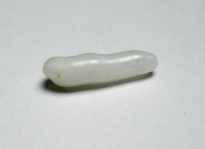 Clam Pearl 15+mm Elongated Shape